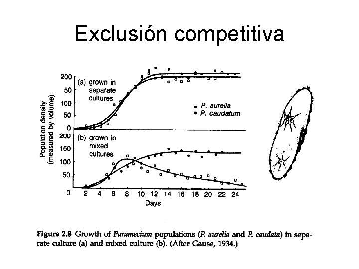 Exclusión competitiva