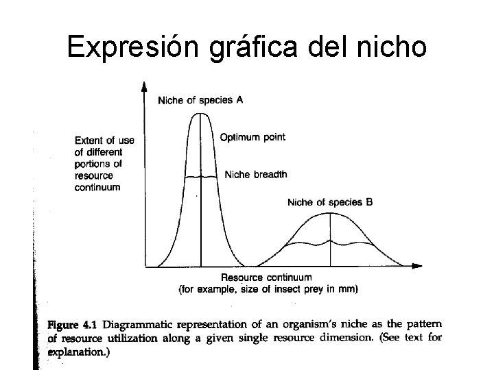 Expresión gráfica del nicho