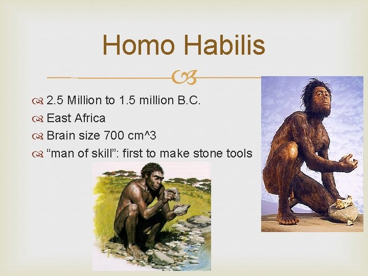 Homo Habilis 2. 5 Million to 1. 5 million B. C. East Africa Brain