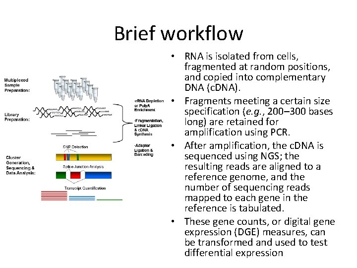 Brief workflow • RNA is isolated from cells, fragmented at random positions, and copied