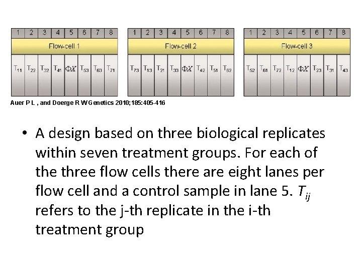 Auer P L , and Doerge R W Genetics 2010; 185: 405 -416 •