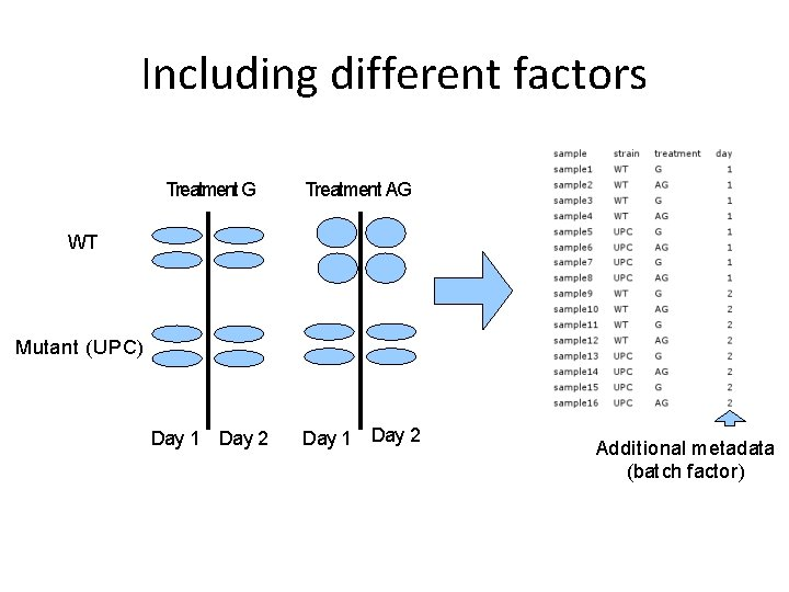 Including different factors Treatment G Treatment AG Day 1 Day 2 WT Mutant (UPC)