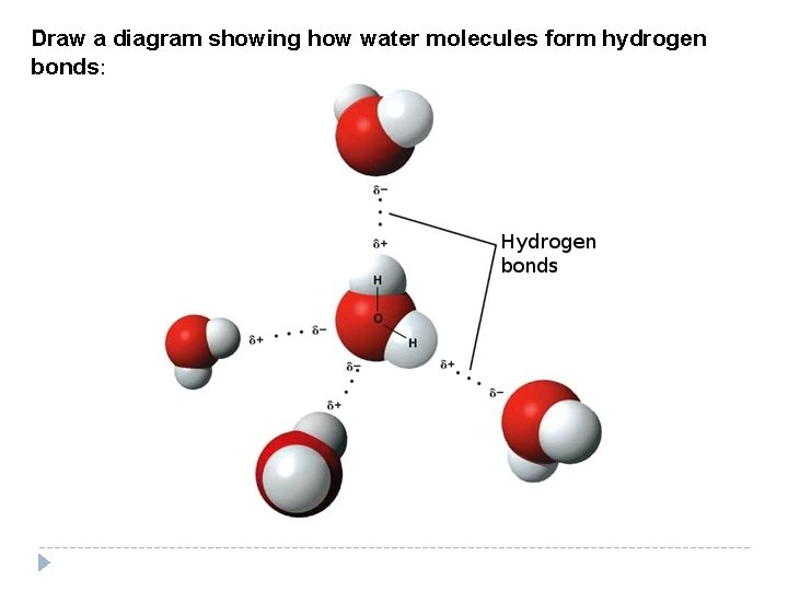 Draw a diagram showing how water molecules form hydrogen bonds: