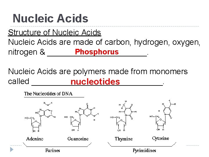 Nucleic Acids Structure of Nucleic Acids are made of carbon, hydrogen, oxygen, Phosphorus nitrogen