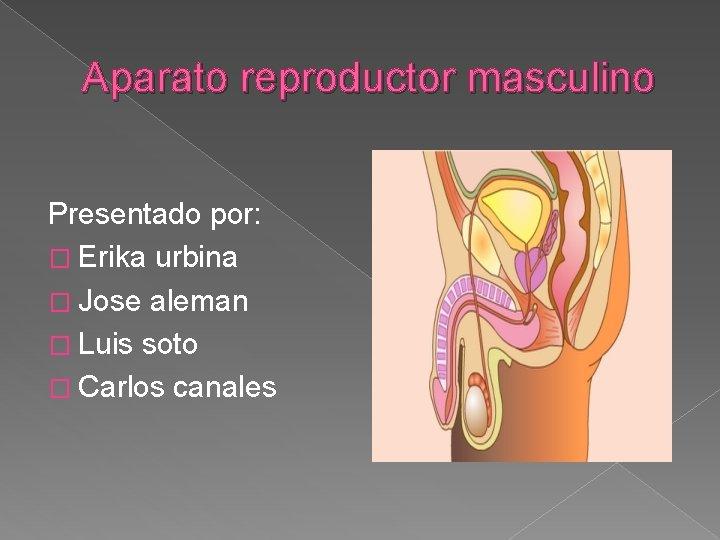 Aparato reproductor masculino Presentado por: � Erika urbina � Jose aleman � Luis soto