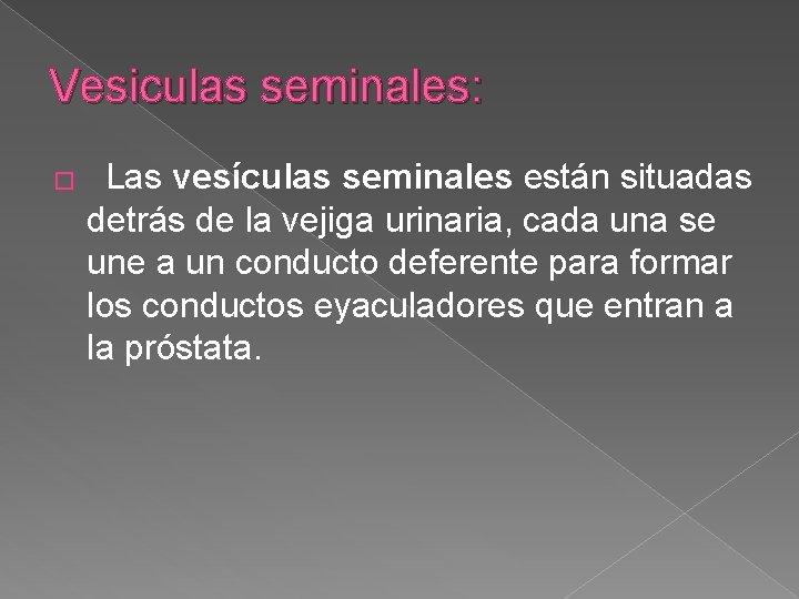 Vesiculas seminales: � Las vesículas seminales están situadas detrás de la vejiga urinaria, cada