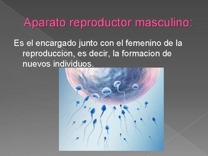 Aparato reproductor masculino: Es el encargado junto con el femenino de la reproduccion, es