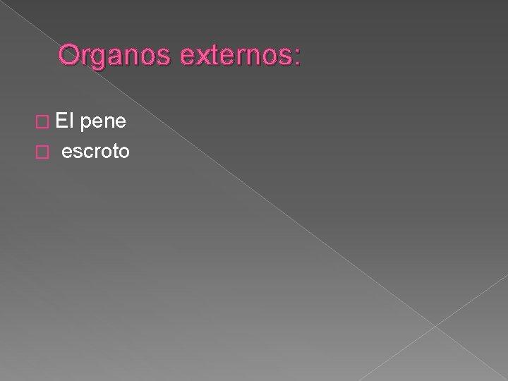 Organos externos: � El pene � escroto