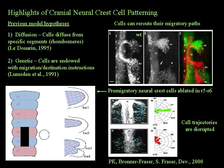 Highlights of Cranial Neural Crest Cell Patterning Previous model hypotheses 1) Diffusion – Cells