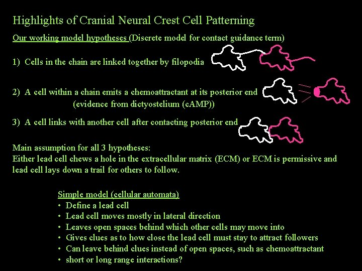 Highlights of Cranial Neural Crest Cell Patterning Our working model hypotheses (Discrete model for