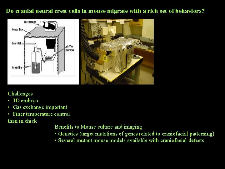Do cranial neural crest cells in mouse migrate with a rich set of behaviors?