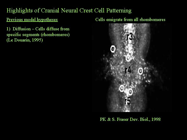 Highlights of Cranial Neural Crest Cell Patterning Previous model hypotheses Cells emigrate from all