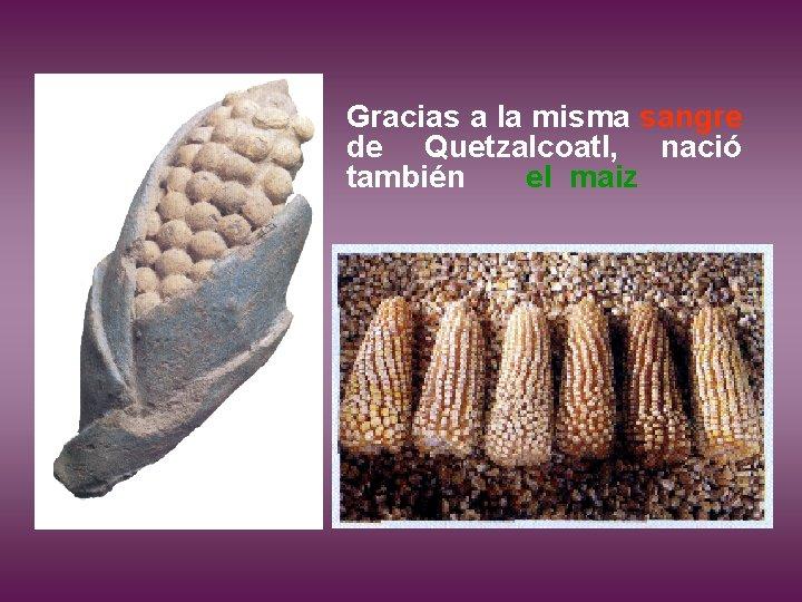 Gracias a la misma sangre de Quetzalcoatl, nació también el maiz