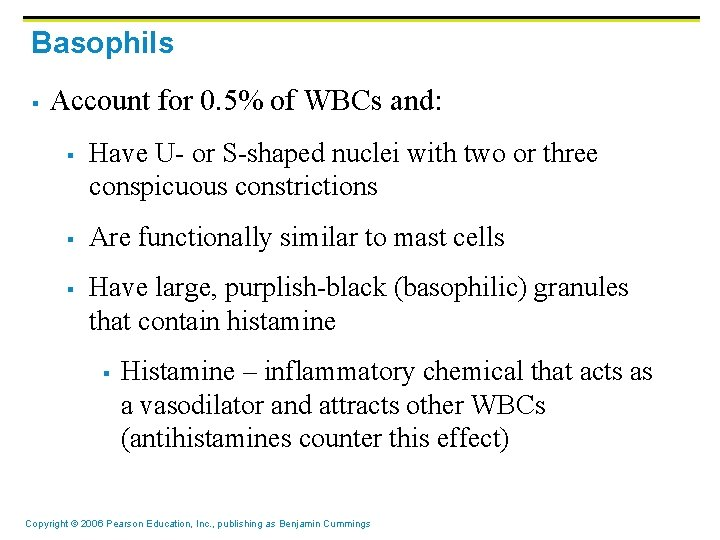 Basophils § Account for 0. 5% of WBCs and: § § § Have U-