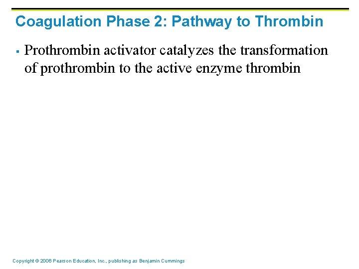 Coagulation Phase 2: Pathway to Thrombin § Prothrombin activator catalyzes the transformation of prothrombin