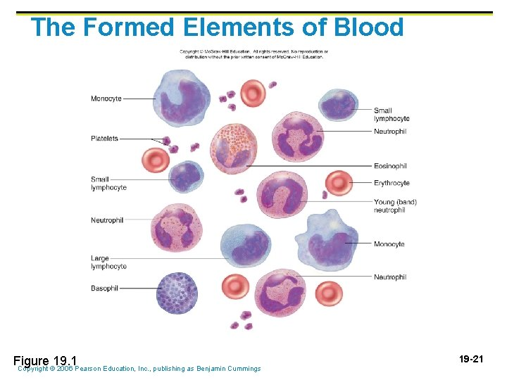 The Formed Elements of Blood Figure 19. 1 Copyright © 2006 Pearson Education, Inc.