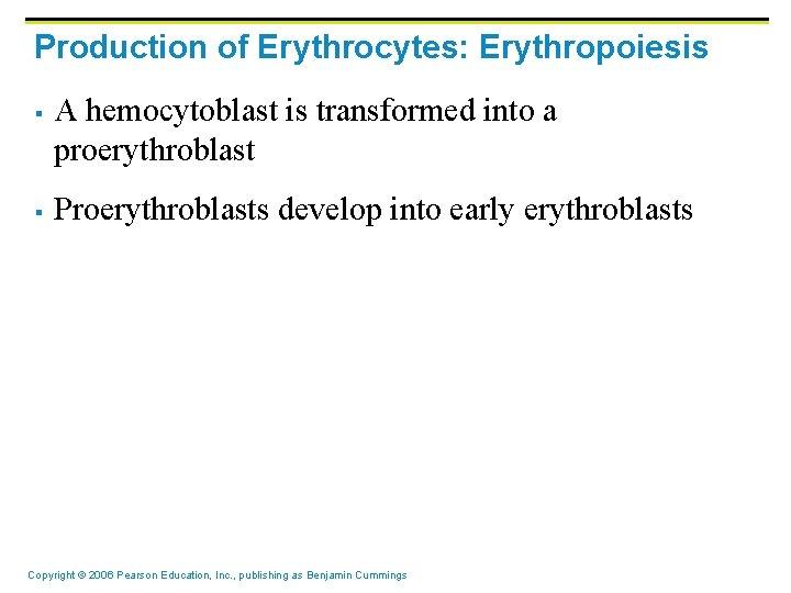 Production of Erythrocytes: Erythropoiesis § § A hemocytoblast is transformed into a proerythroblast Proerythroblasts