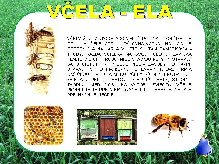 VČELA - ELA VČELY ŽIJÚ V ÚĽOCH AKO VEĽKÁ RODINA – VOLÁME ICH ROJ.