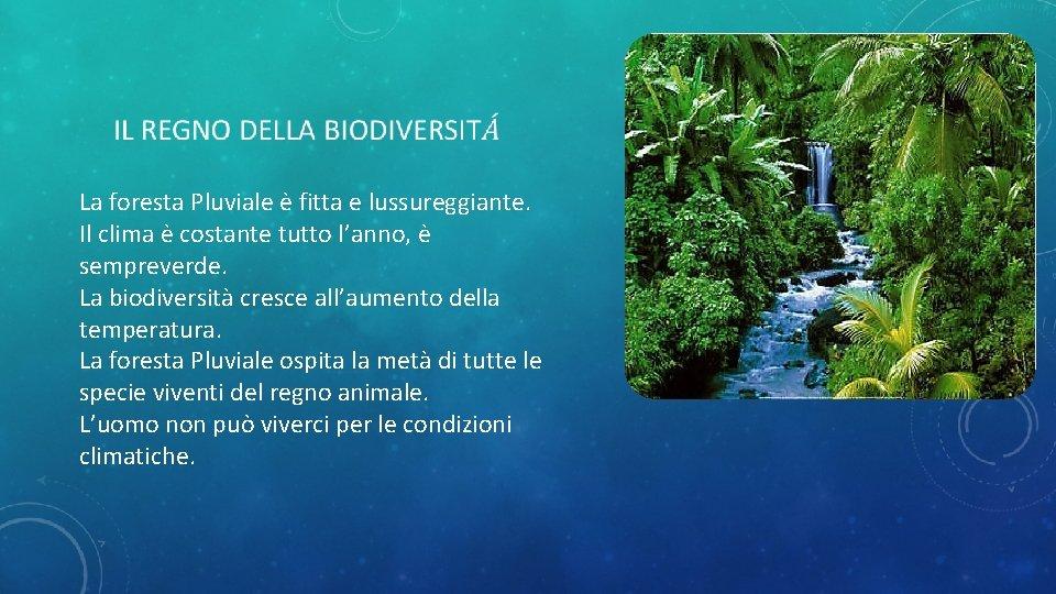 La foresta Pluviale è fitta e lussureggiante. Il clima è costante tutto l'anno,