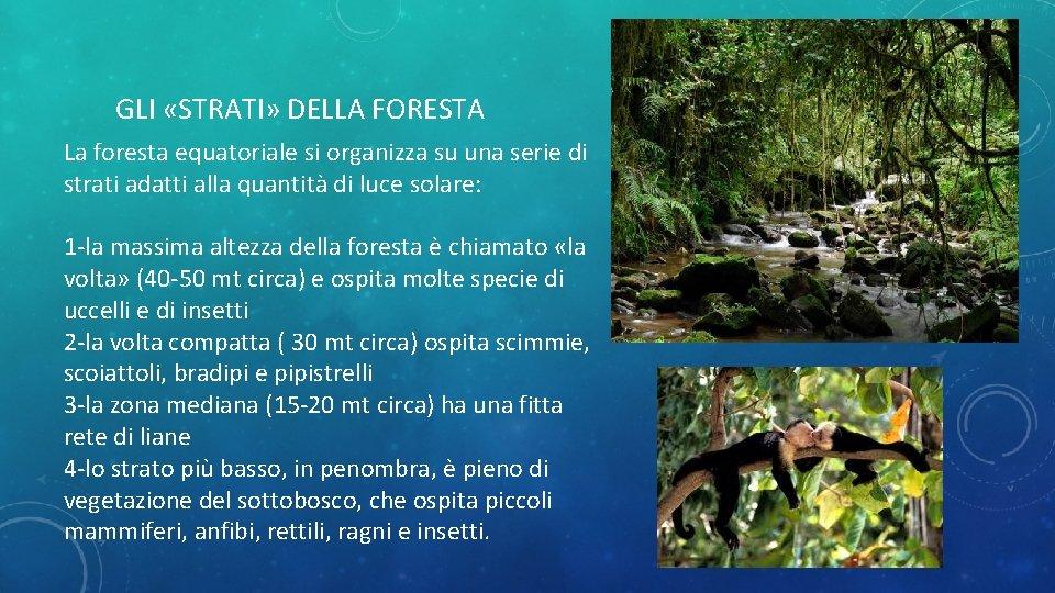 GLI «STRATI» DELLA FORESTA La foresta equatoriale si organizza su una serie di strati