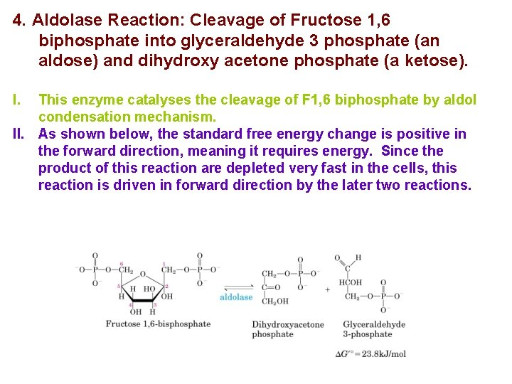 4. Aldolase Reaction: Cleavage of Fructose 1, 6 biphosphate into glyceraldehyde 3 phosphate (an