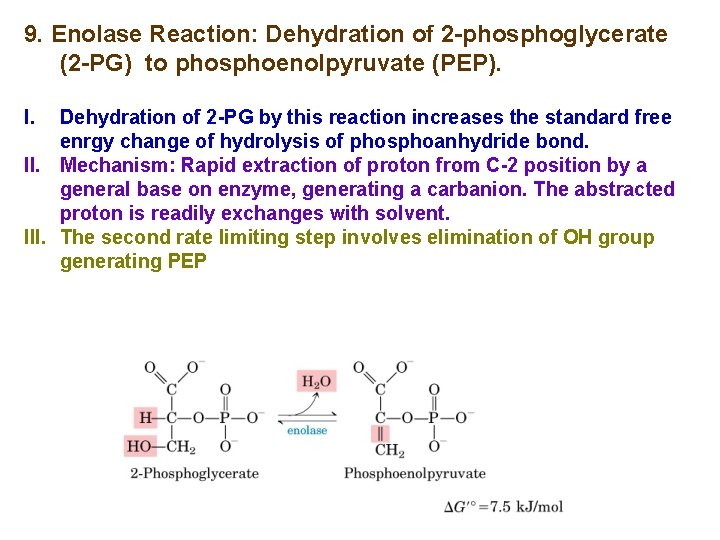 9. Enolase Reaction: Dehydration of 2 -phosphoglycerate (2 -PG) to phosphoenolpyruvate (PEP). I. Dehydration