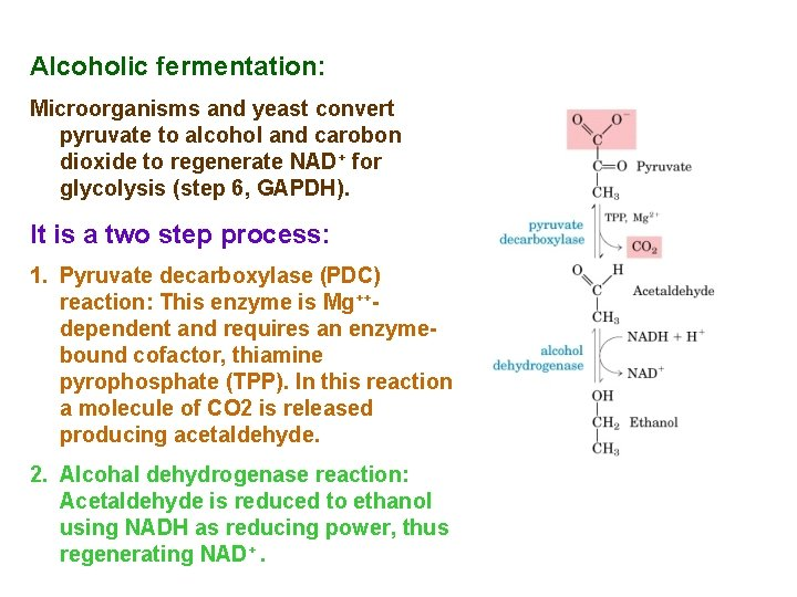 Alcoholic fermentation: Microorganisms and yeast convert pyruvate to alcohol and carobon dioxide to regenerate