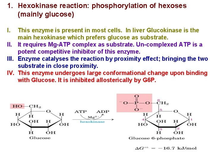 1. Hexokinase reaction: phosphorylation of hexoses (mainly glucose) I. This enzyme is present in