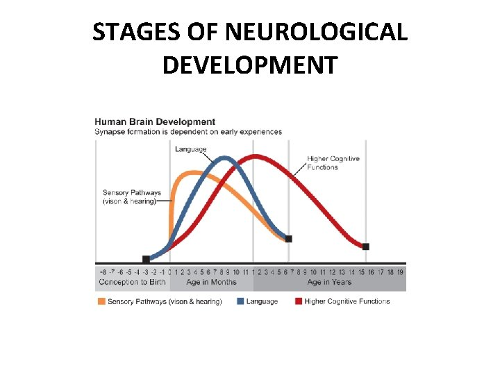 STAGES OF NEUROLOGICAL DEVELOPMENT