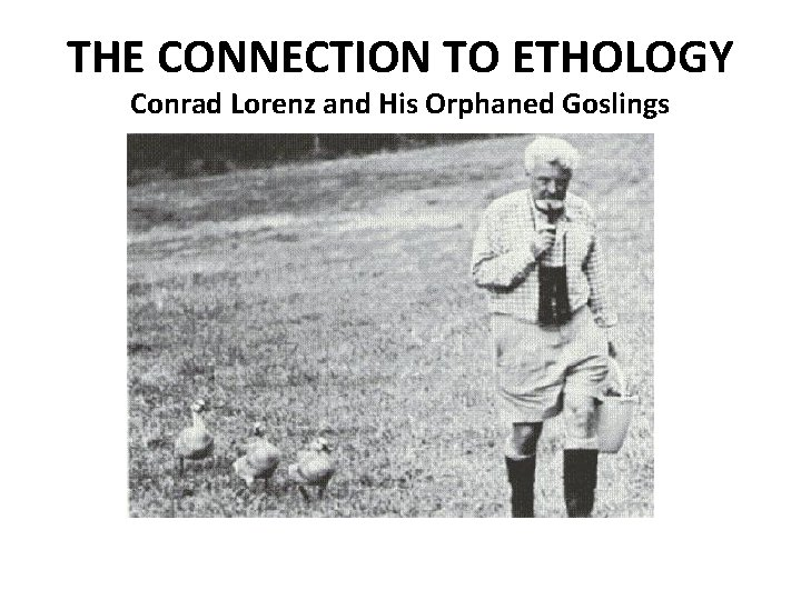 THE CONNECTION TO ETHOLOGY Conrad Lorenz and His Orphaned Goslings