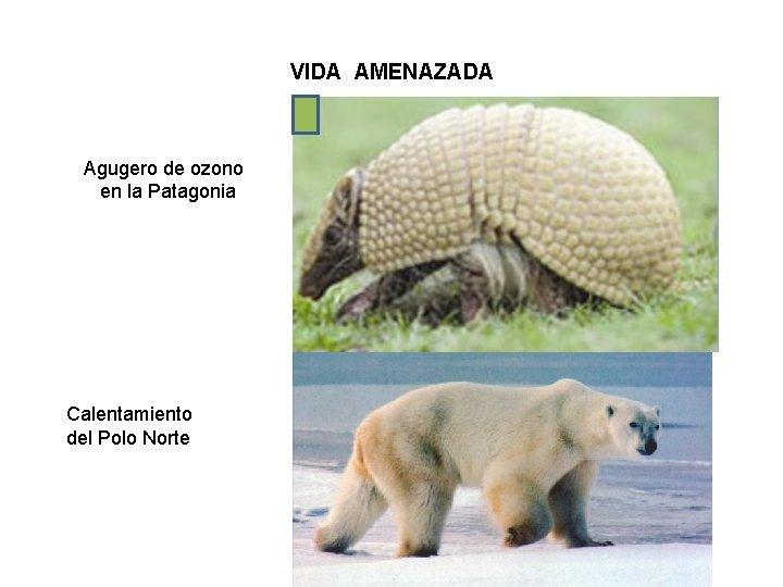 VIDA AMENAZADA Agugero de ozono en la Patagonia Calentamiento del Polo Norte