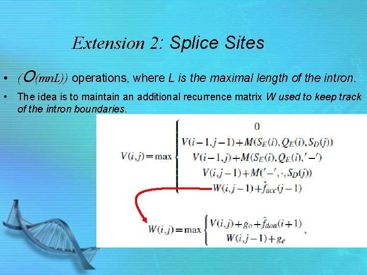 Extension 2: Splice Sites • (O(mn. L)) operations, where L is the maximal length