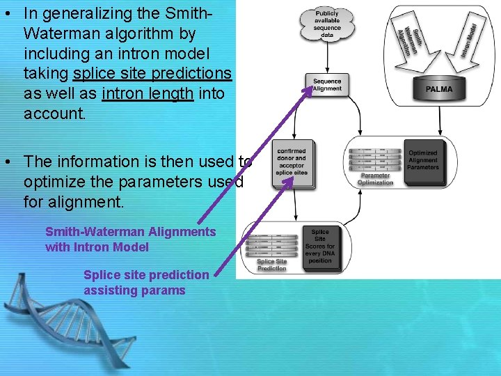 • In generalizing the Smith. Waterman algorithm by including an intron model taking