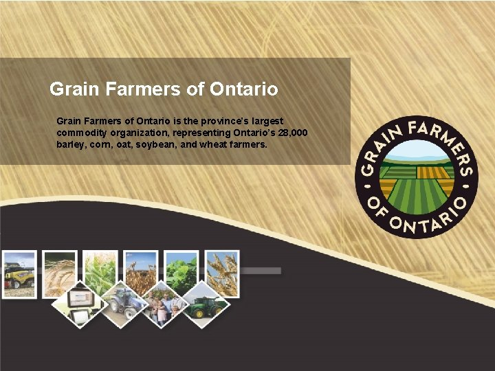 Grain Farmers of Ontario is the province's largest commodity organization, representing Ontario's 28, 000