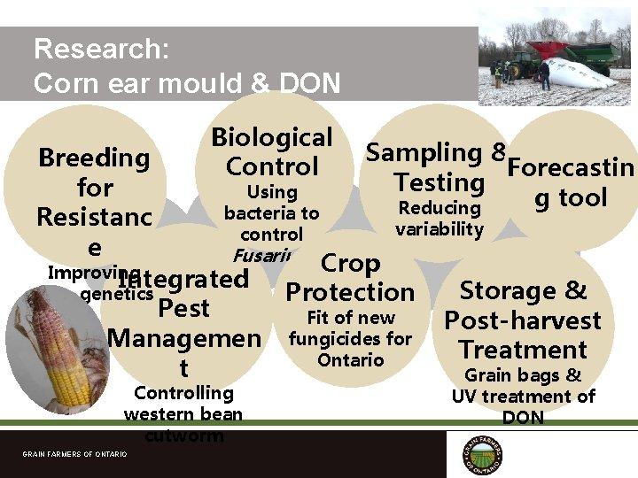 Research: Corn ear mould & DON Biological Control Sampling & Breeding Forecastin Testing for