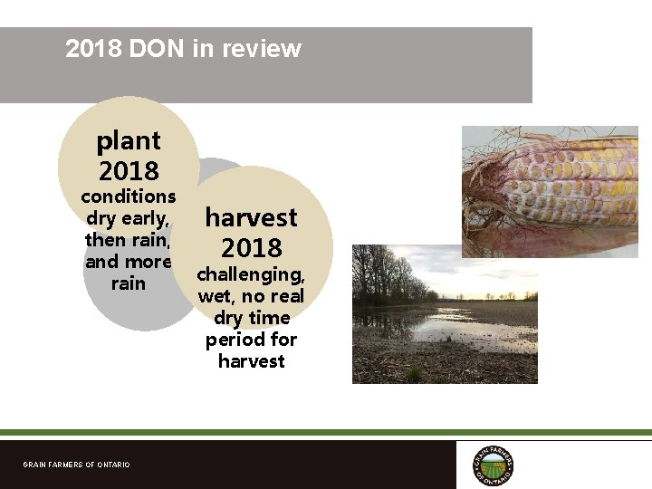 2018 DON in review plant 2018 conditions dry early, then rain, and more rain