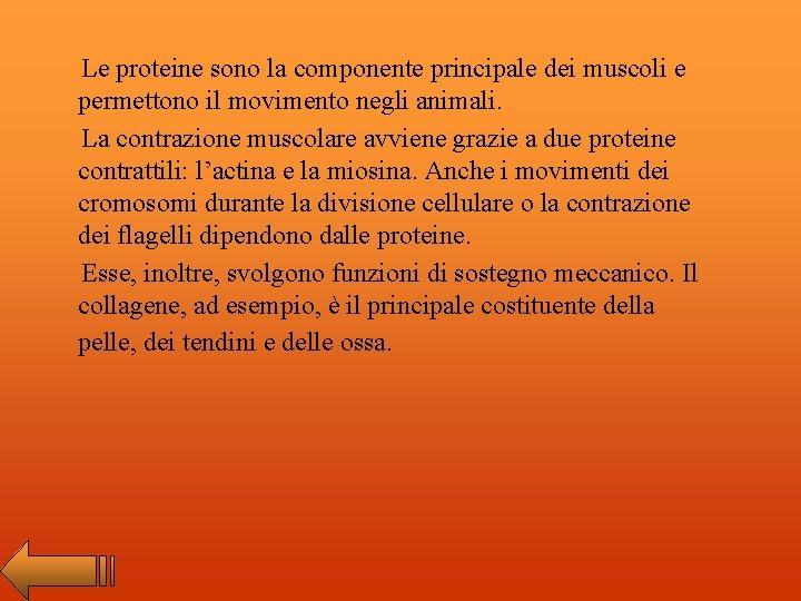 Le proteine sono la componente principale dei muscoli e permettono il movimento negli animali.