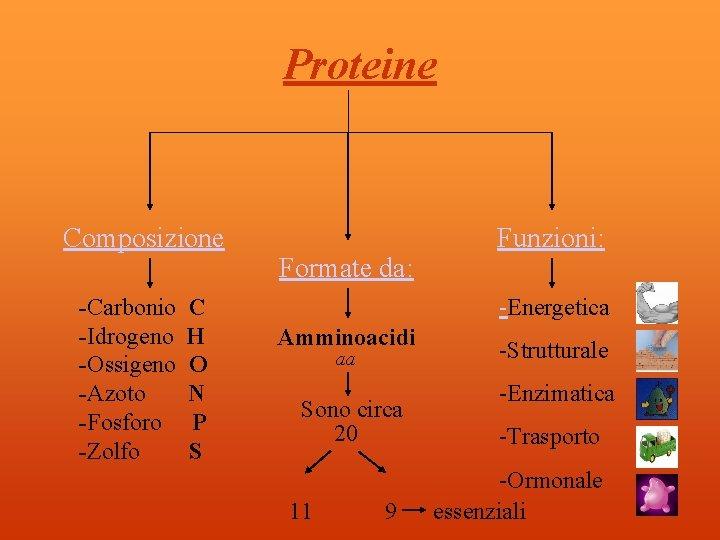 Proteine Composizione -Carbonio -Idrogeno -Ossigeno -Azoto -Fosforo -Zolfo C H O N P S