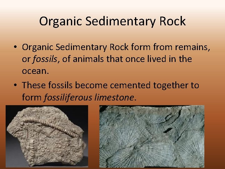Organic Sedimentary Rock • Organic Sedimentary Rock form from remains, or fossils, of animals