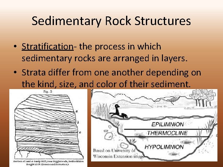 Sedimentary Rock Structures • Stratification- the process in which sedimentary rocks are arranged in