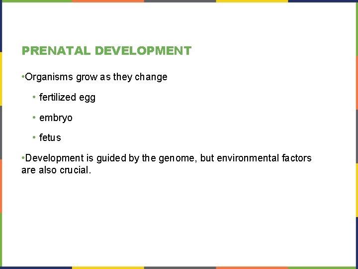 PRENATAL DEVELOPMENT • Organisms grow as they change • fertilized egg • embryo •