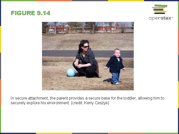 FIGURE 9. 14 In secure attachment, the parent provides a secure base for the