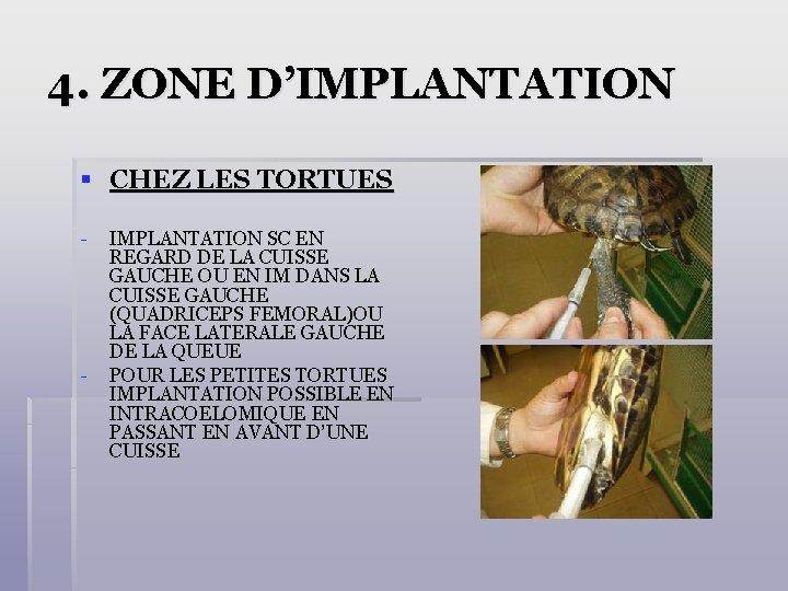 4. ZONE D'IMPLANTATION § CHEZ LES TORTUES - - IMPLANTATION SC EN REGARD DE