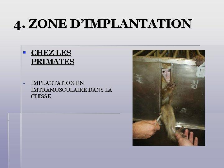 4. ZONE D'IMPLANTATION § CHEZ LES PRIMATES - IMPLANTATION EN IMTRAMUSCULAIRE DANS LA CUISSE.
