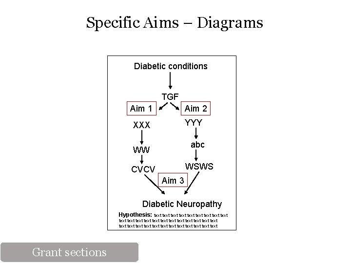 Specific Aims – Diagrams Diabetic conditions TGF Aim 1 Aim 2 XXX YYY abc