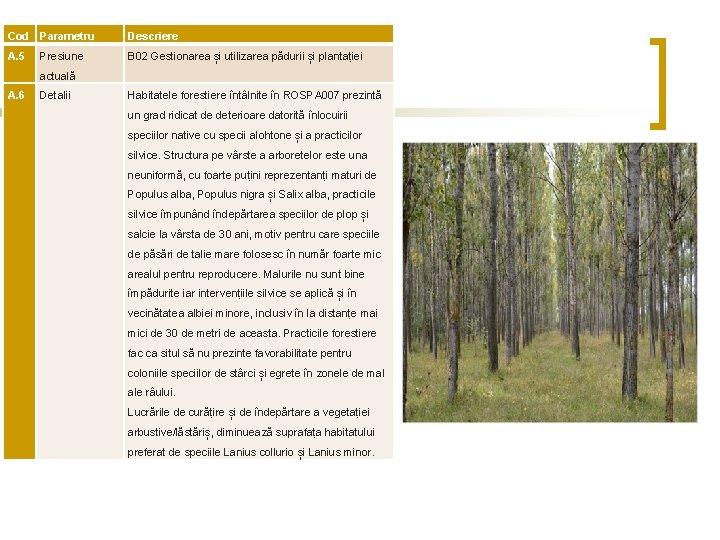 Cod Parametru Descriere A. 5 Presiune B 02 Gestionarea și utilizarea pădurii și plantației