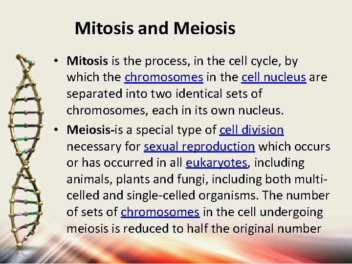 Mitosis and Meiosis • Mitosis is the process, in the cell cycle, by which