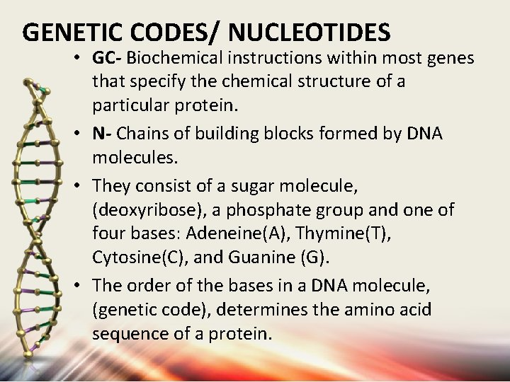 GENETIC CODES/ NUCLEOTIDES • GC- Biochemical instructions within most genes that specify the chemical