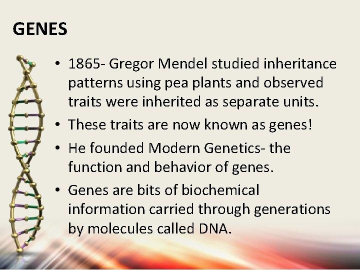 GENES • 1865 - Gregor Mendel studied inheritance patterns using pea plants and observed