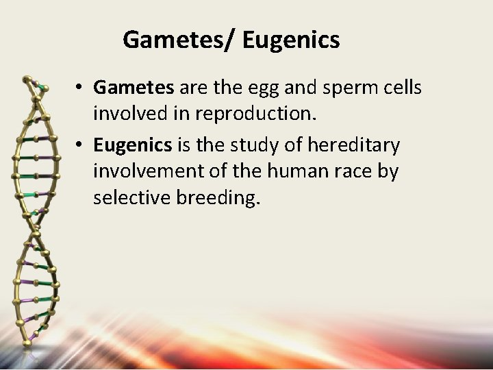 Gametes/ Eugenics • Gametes are the egg and sperm cells involved in reproduction. •